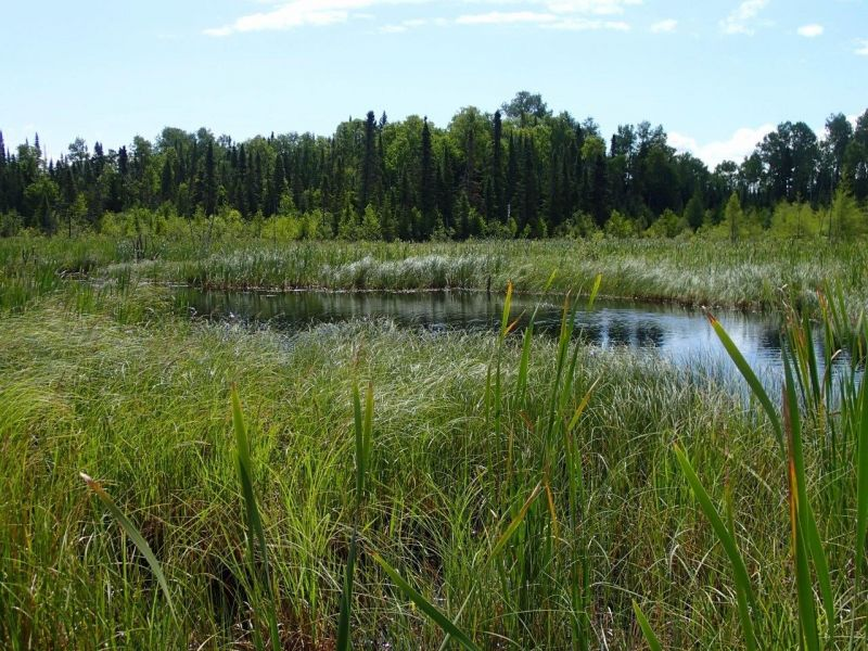 Neebing River Watershed Wetland Evaluation Open House