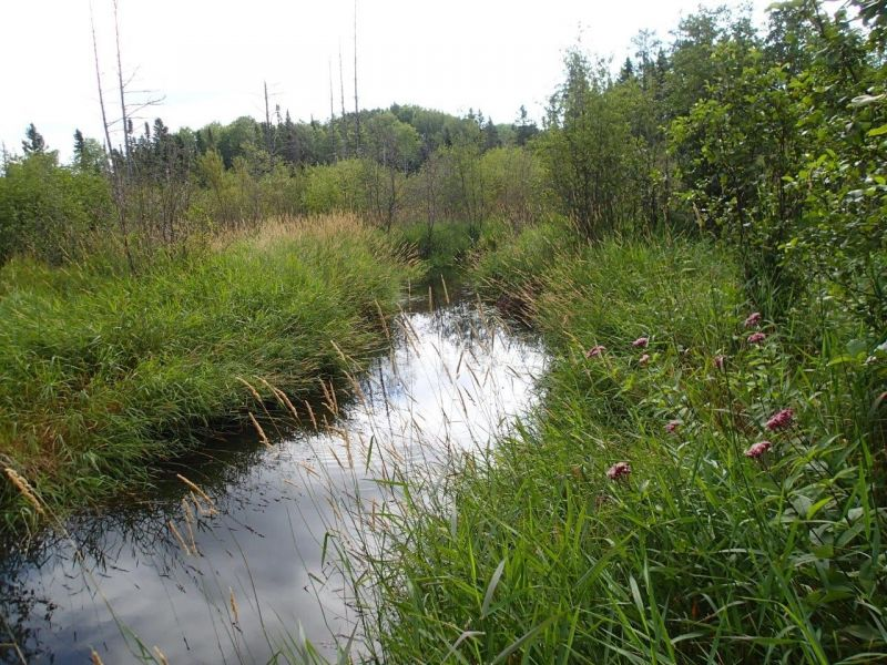 Mosquito Creek Watershed Wetland Evaluation Study Open House