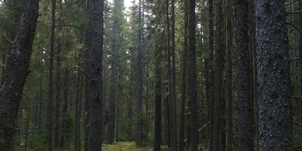 WISHART FOREST PLANNED OPERATIONS OVERVIEW OPEN HOUSE