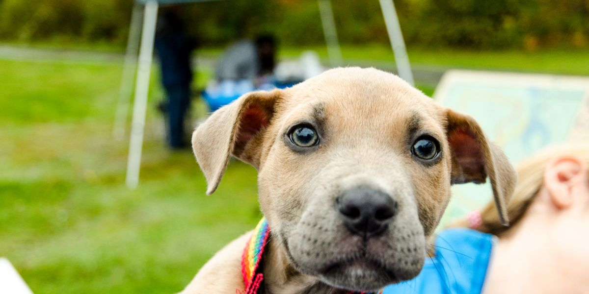 TRAILS AND TAILS DOG ADOPTION FAIR